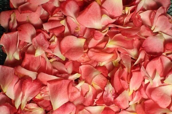 sorpresa petalos de rosa sobre la cama
